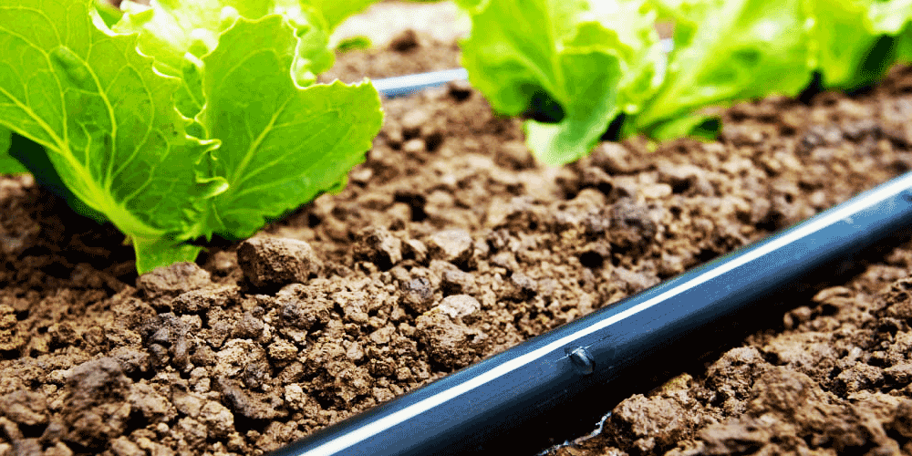How to inject fertilizer and acid in drip irrigation system and Babylon