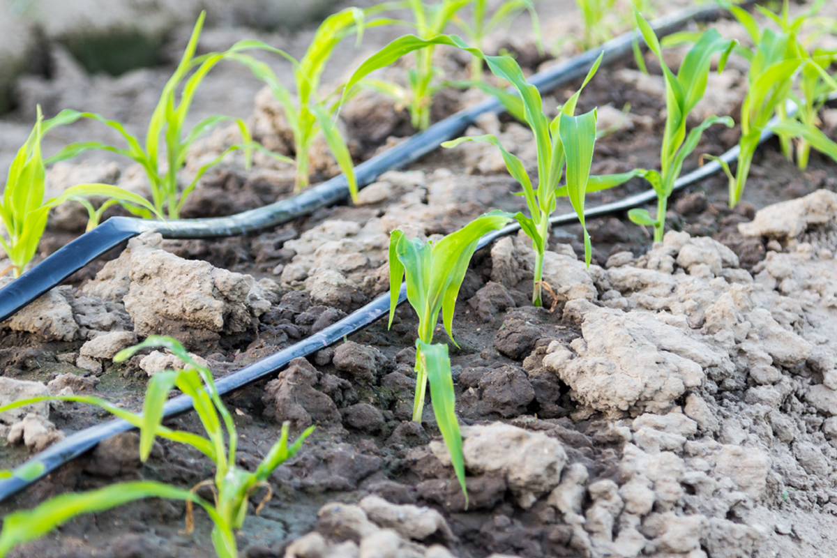 Sustainable agriculture with irrigation planning
